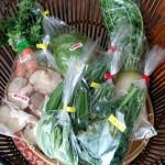 恋する農園トミーファーム 野菜のプレゼント発送しました。